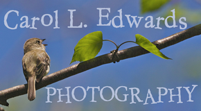 Carol L. Edwards Photography